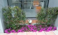 さざんかと芝桜.JPG